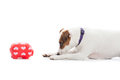 Dog with piggybank a a Royalty Free Stock Photo
