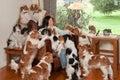 Dog Pile Royalty Free Stock Photo