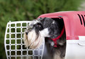 Dog in plastic carrier Royalty Free Stock Photo