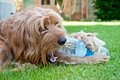 Dog and a plasticbottle with plastic bottle lying on the grass Stock Photos