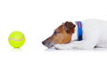 Dog play ball Royalty Free Stock Photo