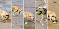 Dog playing ball multiple images on the beach Stock Image