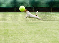 Dog playing big tennis ball Royalty Free Stock Photo