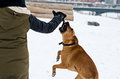 Dog playing with girl dogs in the snow Royalty Free Stock Photography