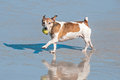 Dog playing in the sea at a beach hermanus Stock Photography