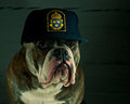 Dog in a police hat Stock Photo