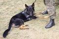 Dog Polish border guards