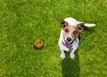 Dog poop on grass in park