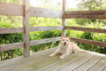 Dog on porch relaxing deck outdoors Royalty Free Stock Photos