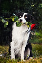 Dog portrait with flower Royalty Free Stock Photo
