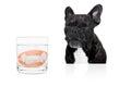Dog prosthetic teeth