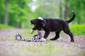 Dog puppy border collies black on nature Royalty Free Stock Photography