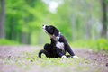 Dog puppy border collies black on nature Stock Photos