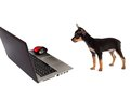 Dog puppy in front of a laptop isolated on white background Royalty Free Stock Photos