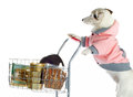 Dog pushing a shopping cart full of food jack russell on white background Royalty Free Stock Photo