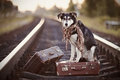 Dog on rails with suitcases the looks for the house the waits for the owner the lost Royalty Free Stock Photos