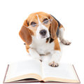 Dog reading book Royalty Free Stock Photo