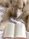 Dog reading book Stock Photo
