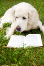 Dog reading a book Royalty Free Stock Photo