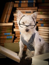 Royalty Free Stock Photos Dog reading books