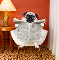 Dog reading newspaper at home Royalty Free Stock Photo