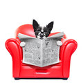 Dog reading newspaper Royalty Free Stock Photo