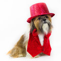 Dog in a Red Party Outfit Stock Photos