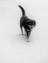 Dog on the road black white Royalty Free Stock Images