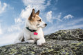 Dog on a rock lying and looking in the distance Royalty Free Stock Photo