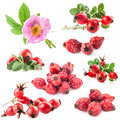 Dog rose rosa canina flowers and fruits isolated on white background Royalty Free Stock Images