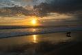 Dog running on the beach during the sunset Chenggu Beach in Bali Royalty Free Stock Photo