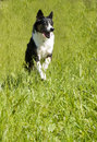 Dog Running Through Field Stock Photography