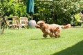 Dog running in the garden that runs Royalty Free Stock Photos