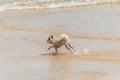 Dog running happy fun on beach when travel at sea Royalty Free Stock Photo