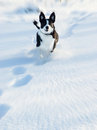 Dog running in the snow Royalty Free Stock Photo