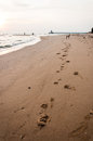 Dog s footprint on the beach rayong thailand Royalty Free Stock Image