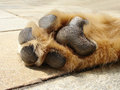 Dog s paw lying in the sun Stock Image