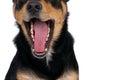 Dog's tongue Royalty Free Stock Photo
