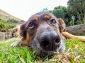 Dog with sad eyes Royalty Free Stock Photo