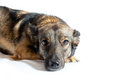 Dog with sad eyes Royalty Free Stock Photo