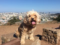 Dog San Francisco Royalty Free Stock Photo