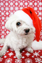 Dog in santa hat Stock Image