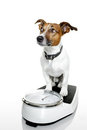 Dog scale Royalty Free Stock Photo