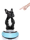 Dog on scale Royalty Free Stock Photo