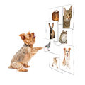 Dog scrolling pet photo wall funny image of a small through a digital Stock Photography