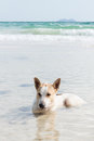 Dog in sea at the beach Stock Image