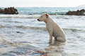 Dog in  sea Royalty Free Stock Photo