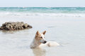 Dog in sea at the beach Royalty Free Stock Photography