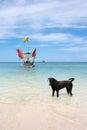Dog in sea labrador the Stock Photos