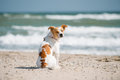 Dog and sea sitting by the Royalty Free Stock Photo